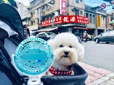 Dogs of Taipei, Taiwan: Part 1 (VIDEO)