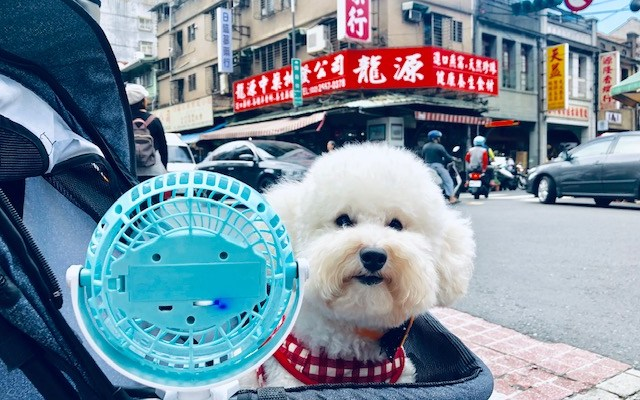 Dogs of Taipei: Part 1 (VIDEO)