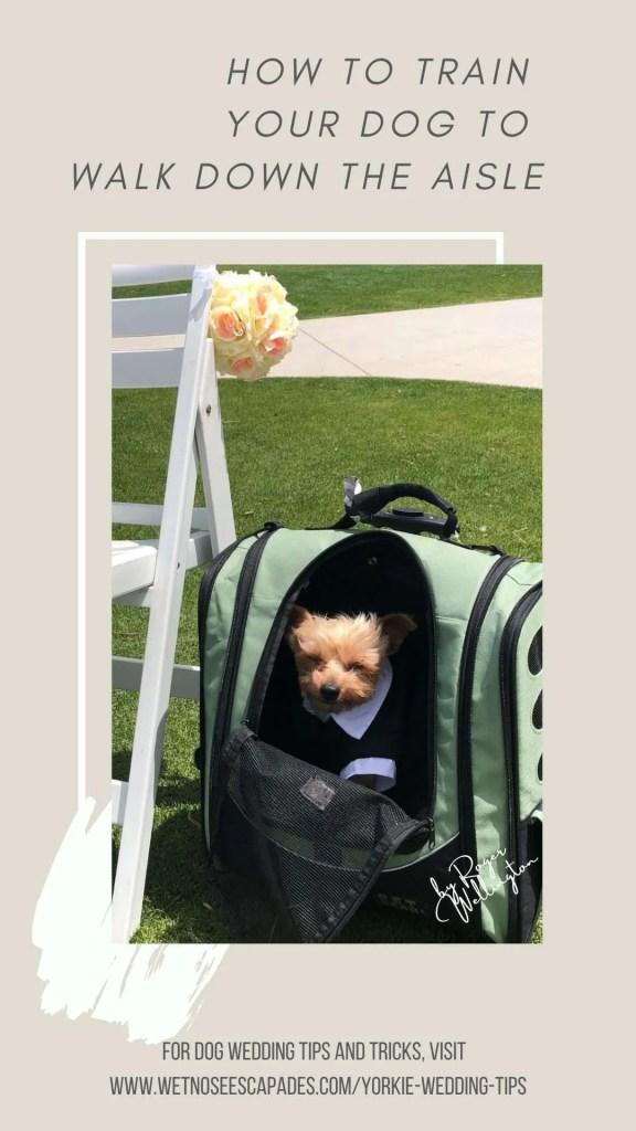 yorkie dog training walk down the aisle