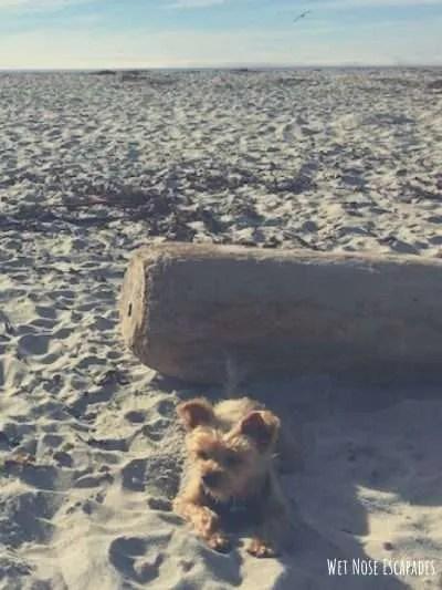 dog-friendly Carmel beach, Dog-friendly Activities in Monterey, CA
