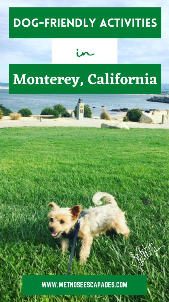 things to do with your dog in monterey