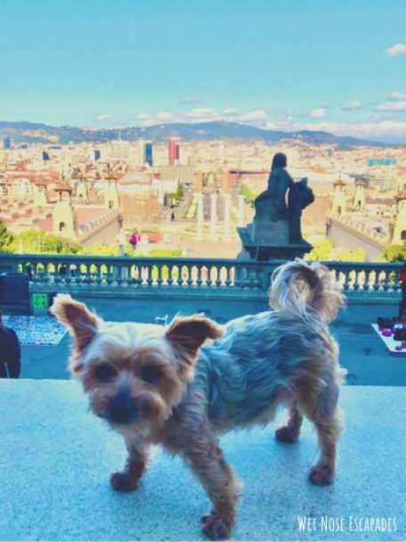 dog friendly montjuic barcelona spain