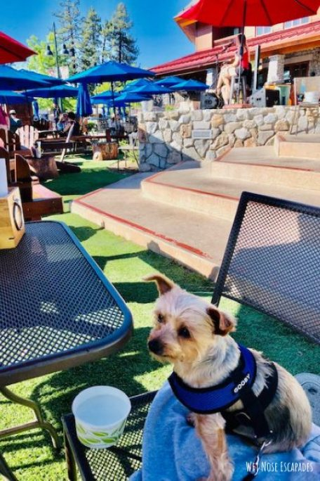 California Burger, Dog-Friendly Restaurants in South Lake Tahoe, CA