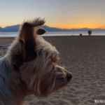Dog-Friendly Restaurants in South Lake Tahoe, CA