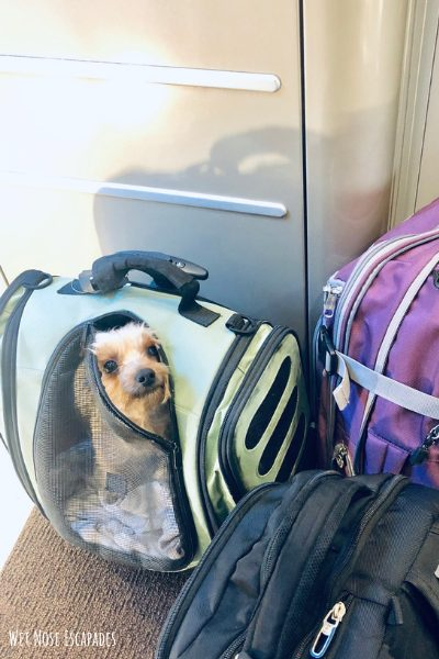 Yorkie Travel Carrier_Gifts for Yorkies + Small Dogs: A Traveling Yorkie's Wish List
