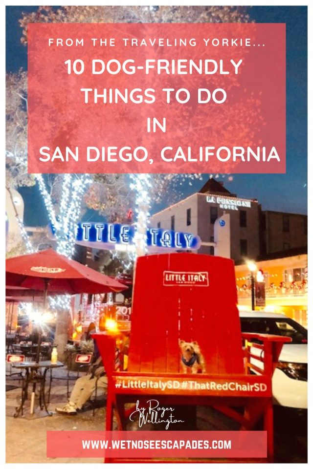 10 Dog-Friendly Activities in San Diego, CA