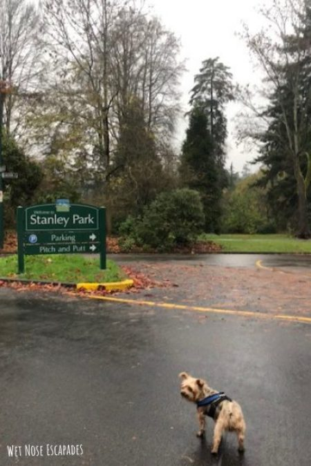 dog-friendly stanley park, vancouver_Places to Take Your Dog in Vancouver, B.C.