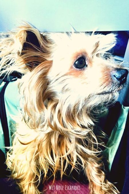travel to stockholm sweden with your dog