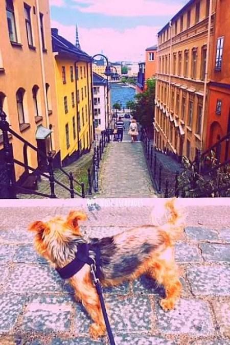 dog-friendly stockholm