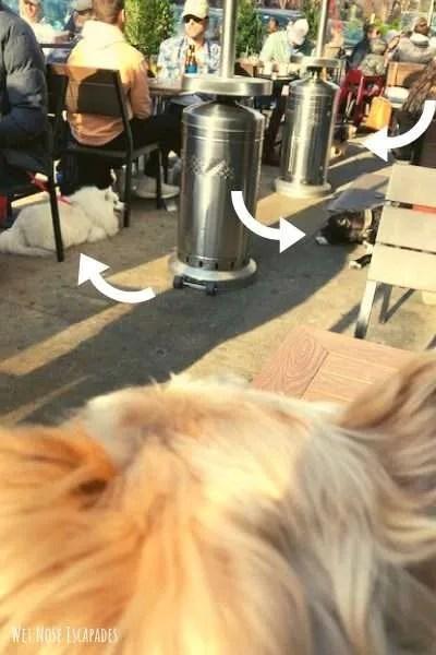 dog-friendly restaurants in hoboken