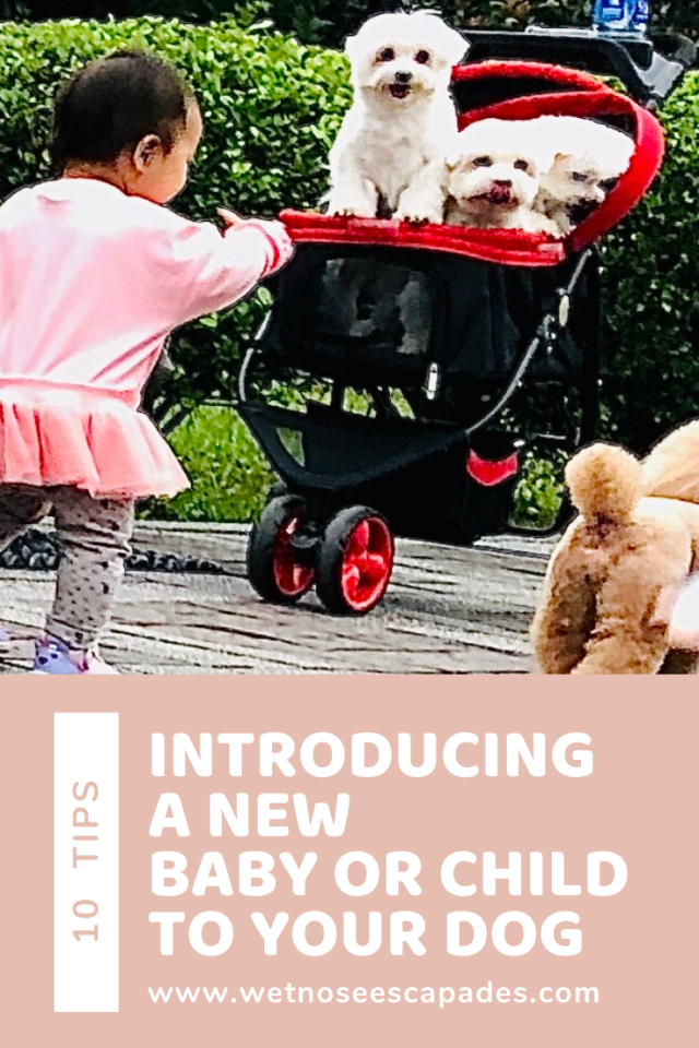 Introducing your new baby or child to a dog