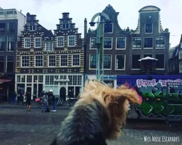 dog friendly amsterdam