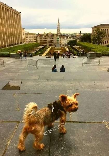 Dog in Brussels, Belgium_Mont des Art Garden