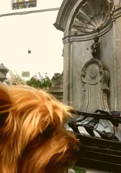 Dog at Manneken Pis Brussels, Belgium