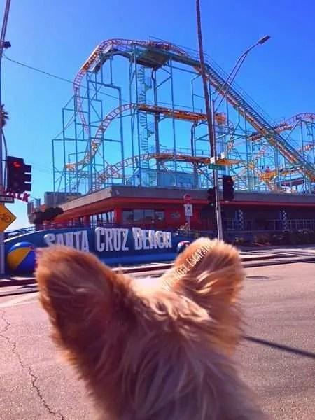 Is Santa Cruz Beach Boardwalk dog-friendly?