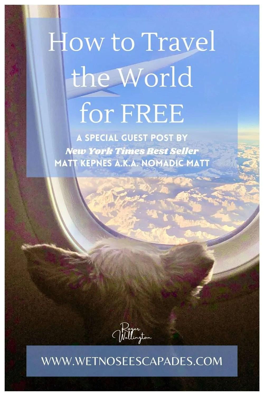 Yorkie Dog on a Plane