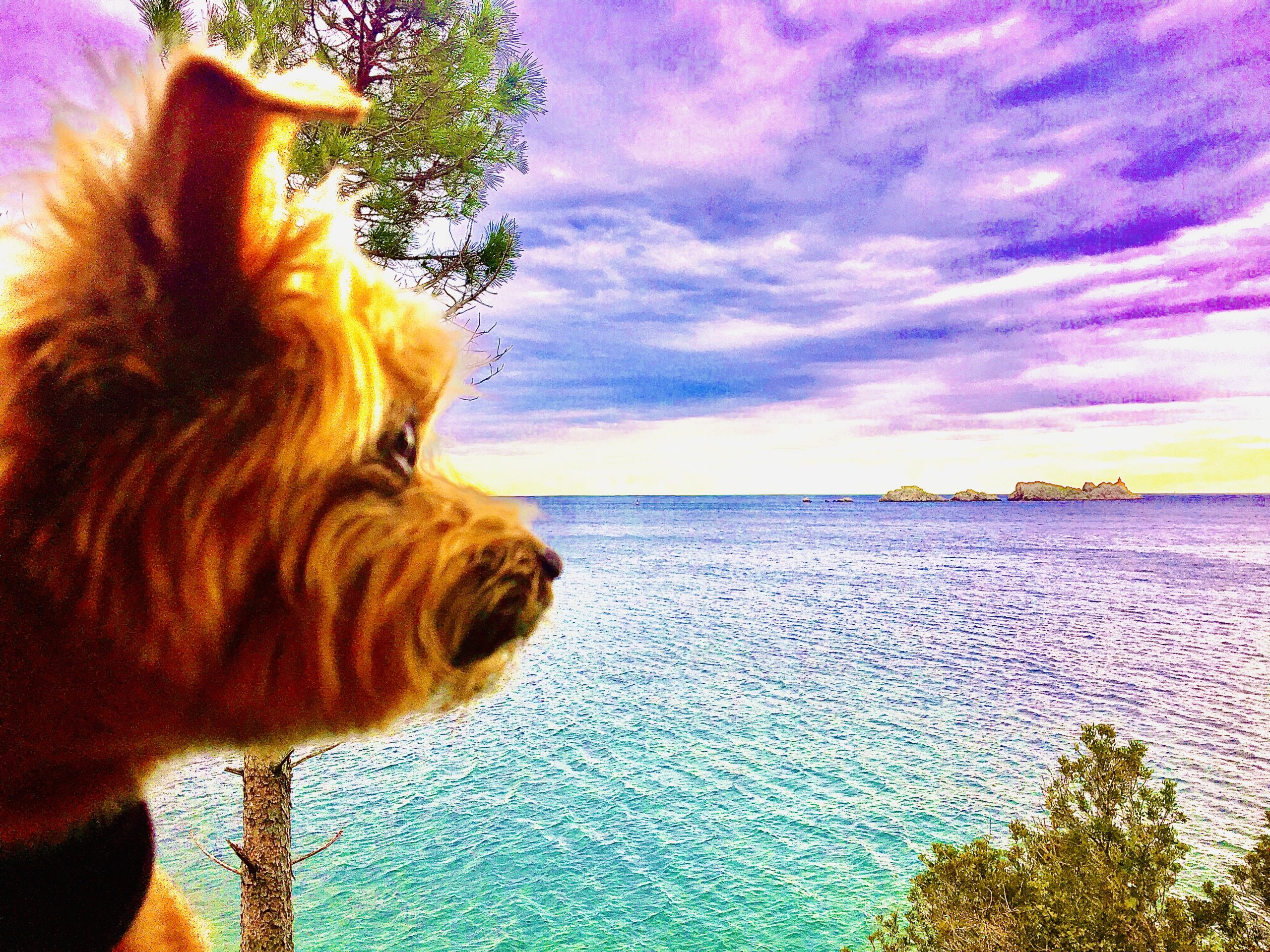 Dog Travel to Dubrovnik, Croatia: Roger Wellington conquers the Pearl of the Adriatic