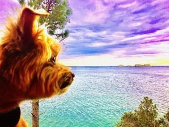 Dog Travel to Dubrovnik, Croatia (VIDEO)