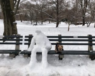 10 Tips to Keep Dogs Safe During Winter in NYC & East Coast