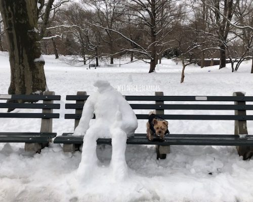 Yorkie Dog at Central Park, NYC during the Winter