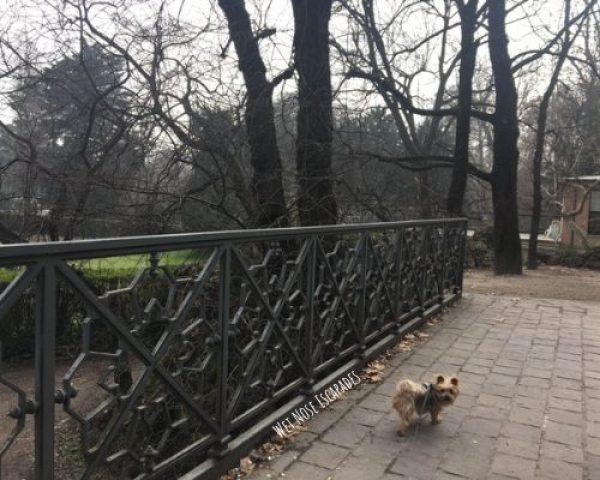 dog friendly parks in Milan Italy