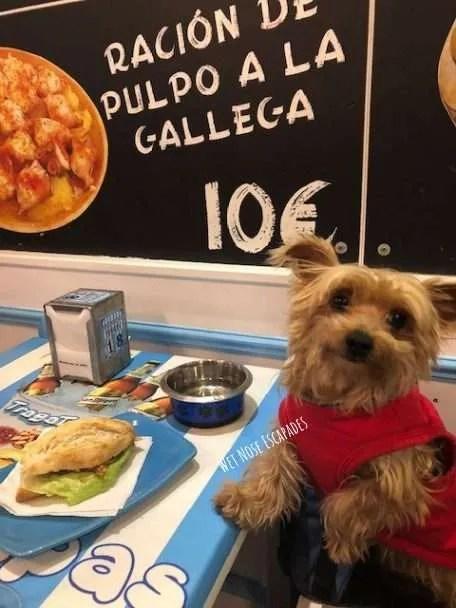 Yorkie Dog at Tapas Bar in Madrid