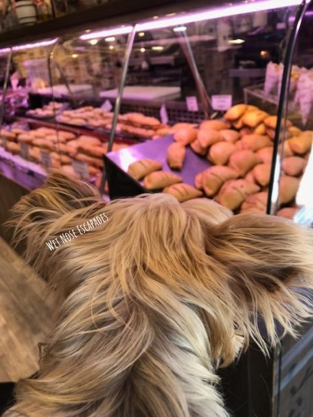 Yorkie Dog getting empanadas in Madrid, Spain