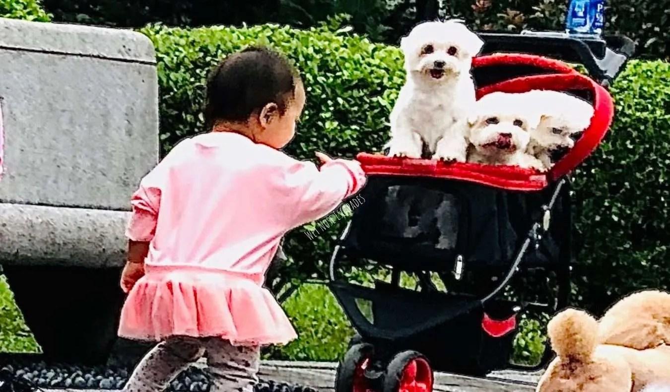 children hugging dogs