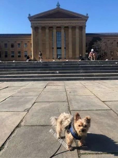 Yorkie Dog at Rocky Steps, Philadelphia