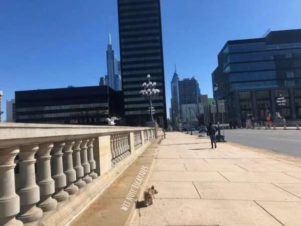 Yorkie Dog visits dog-friendly Philadelphia