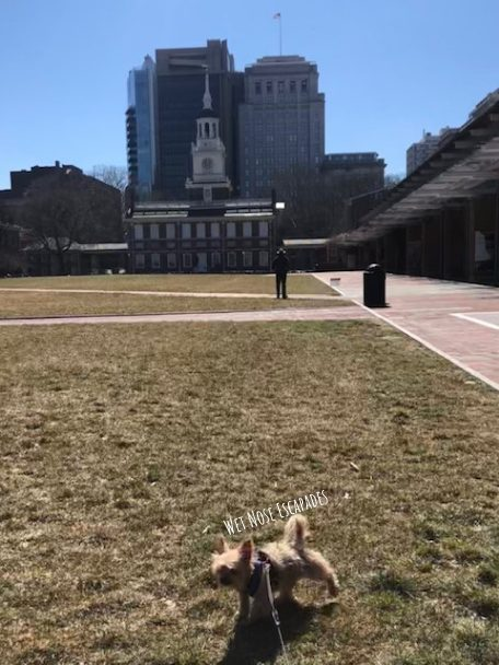 Dog Friendly Independence National Historic Park in Philadelphia
