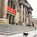 10 BEST Dog-Friendly Parks & Places on the Upper East Side, NYC