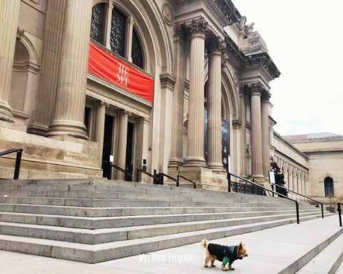 Yorkie Dog at The Met in NYC