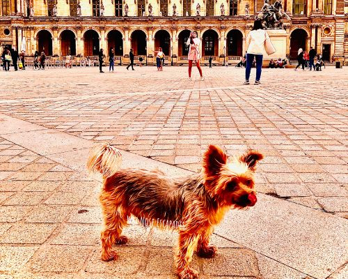Traveling with a Dog to Paris, France: Step by Step Guide + Costs Breakdown