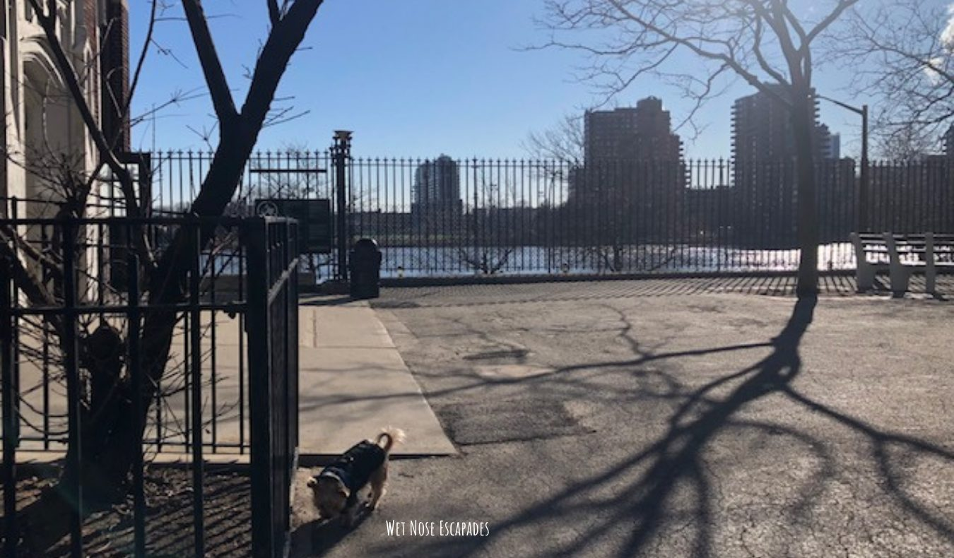 Yorkie dog at John Jay Park, Upper East Side in NYC