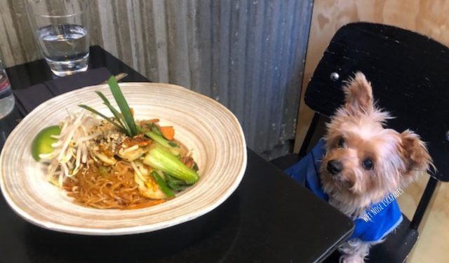 Dog Friendly Restaurants on the Upper East Side, NYC