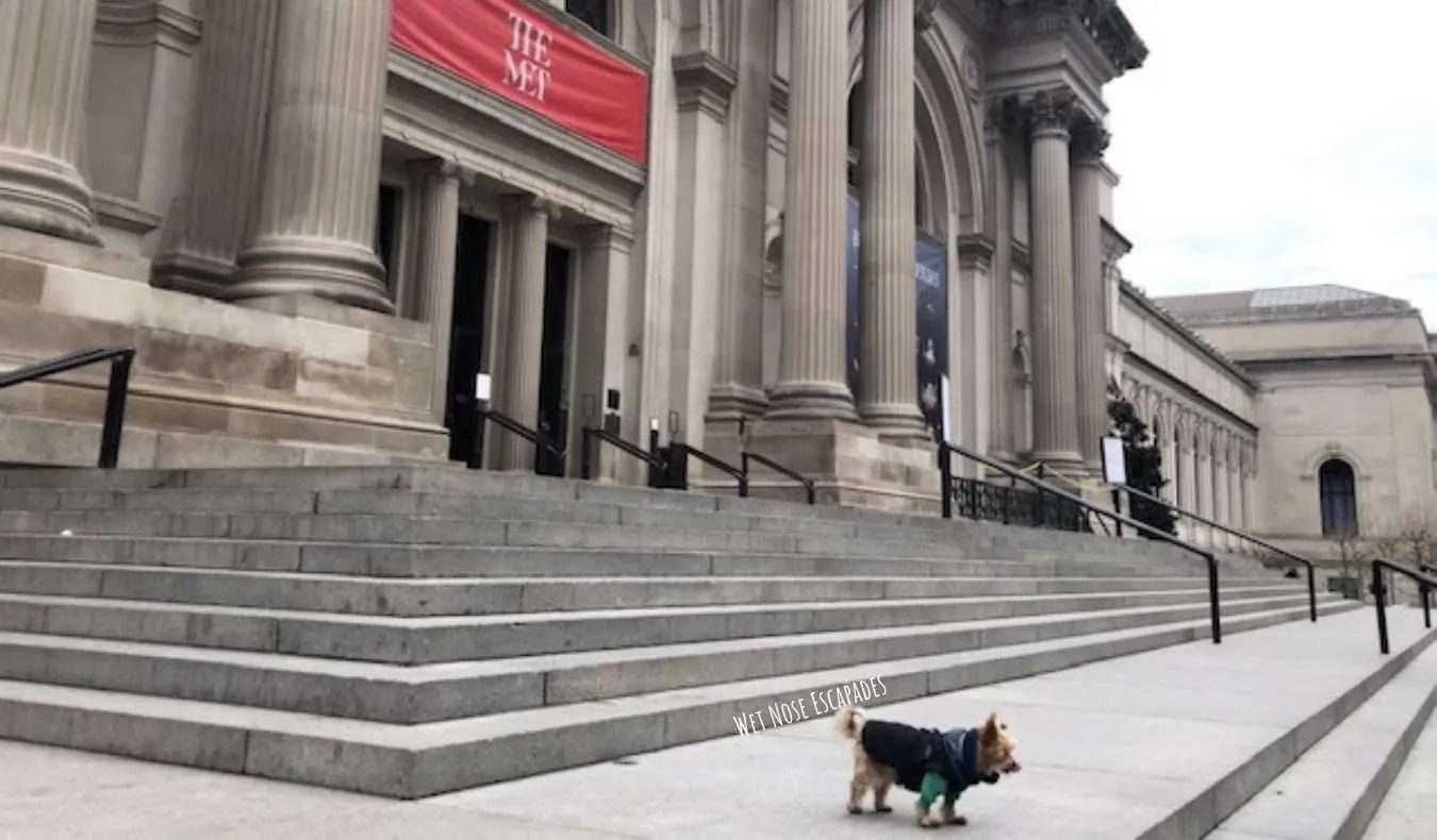 Yorkie Dog at The Met
