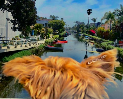 Dog-Friendly Activities in Los Angeles: 10 Things to do with Your Dog (from the Angeleno Yorkie)