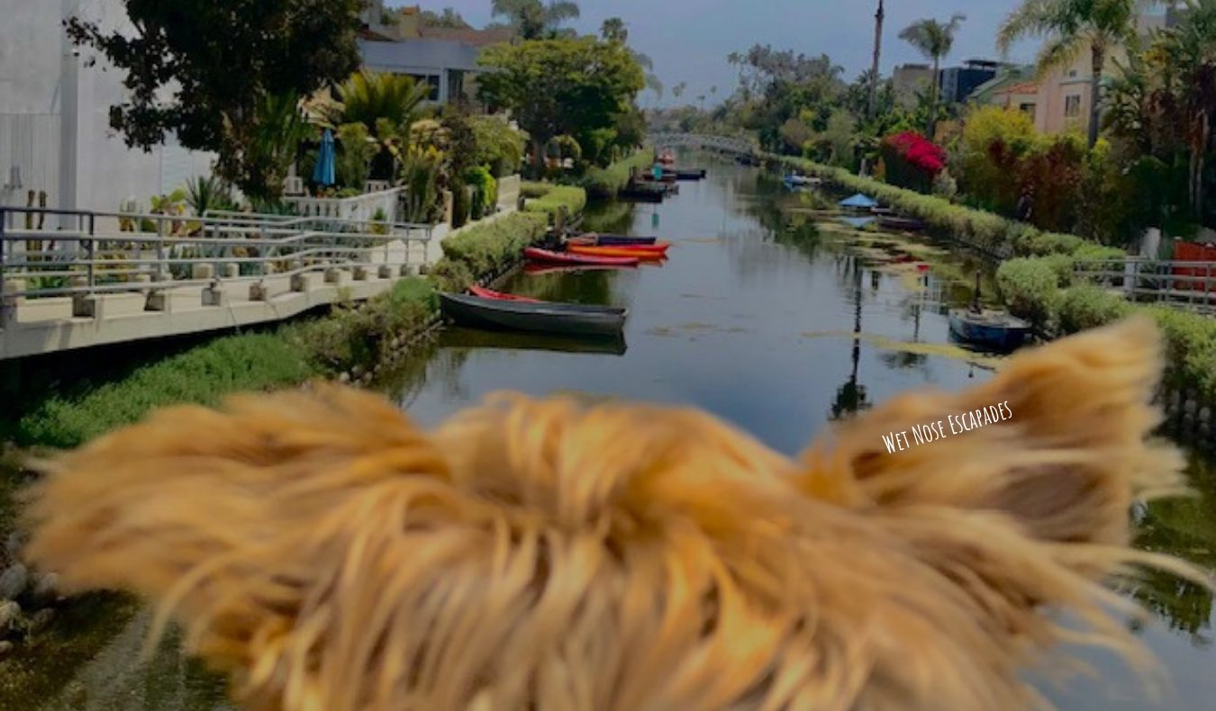 Yorkie Dog at the Canals in Venice, California - Dog-friendly Venice