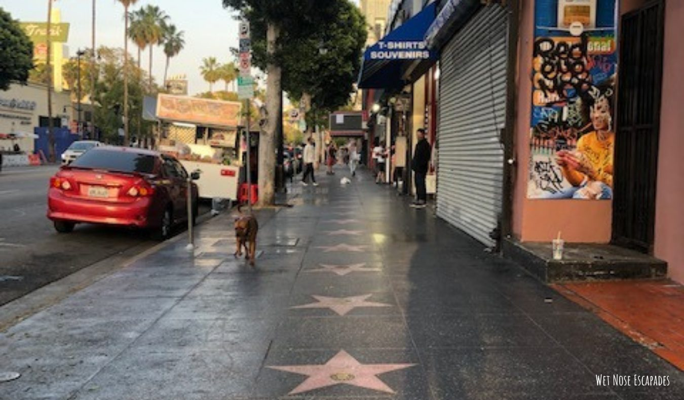 Is Hollywood dog-friendly? Why you shouldn't take your dog to the Hollywood Walk of Fame