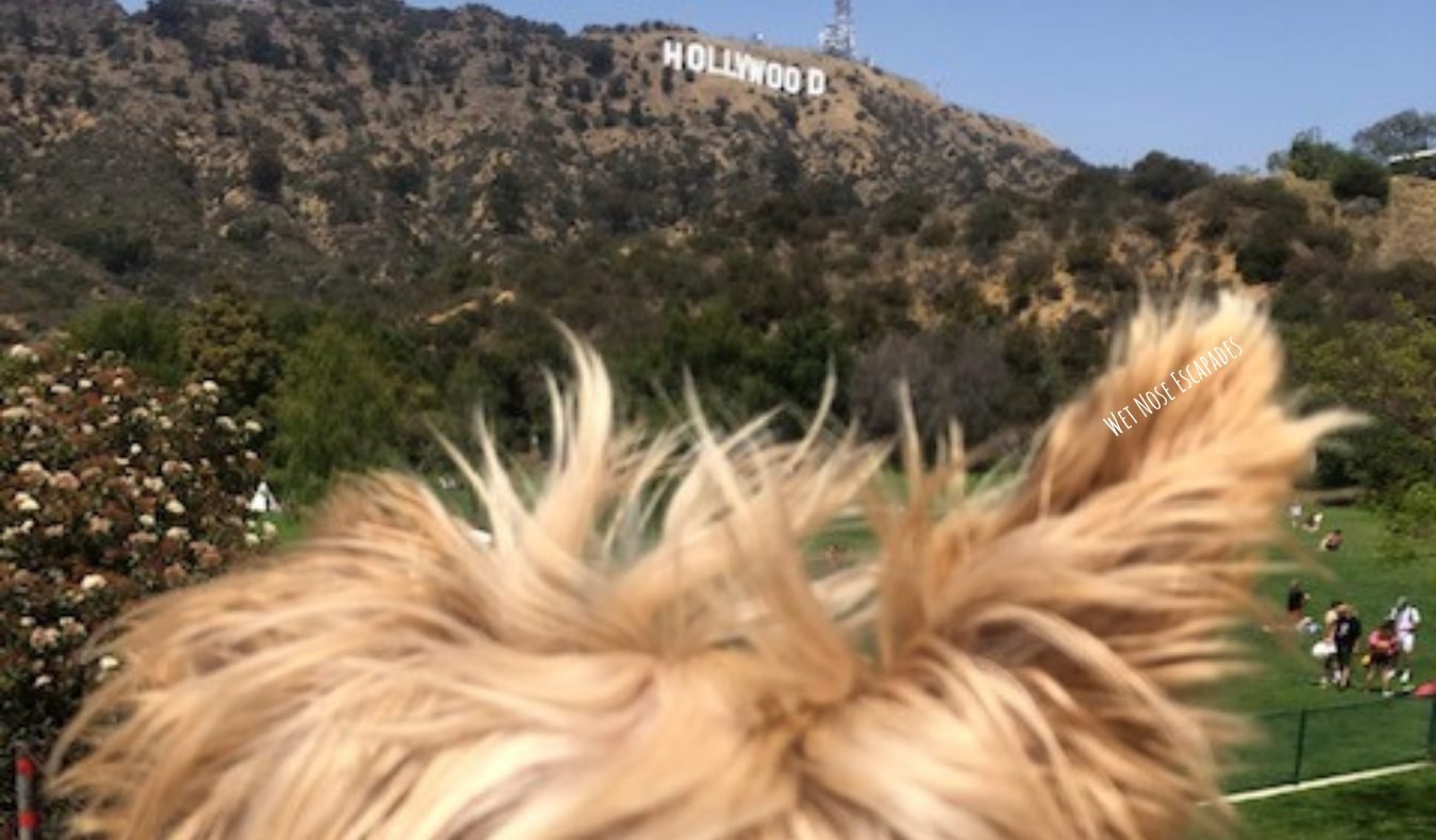 Dog-friendly hike to Hollywood Sign