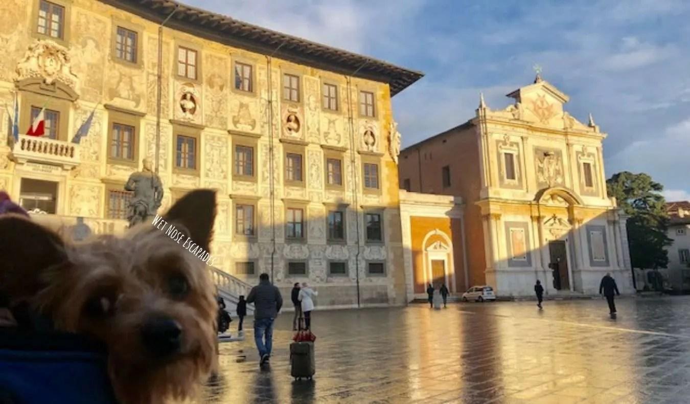 Yorkie Dog at Piazza dei Cavalieri