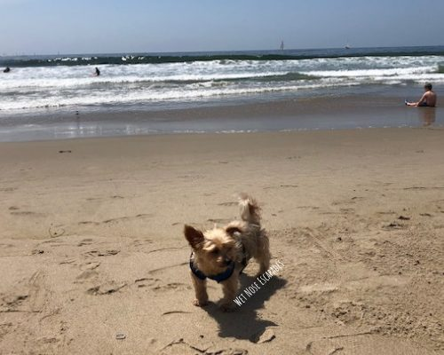 10 BEST Dog-Friendly Day Trips from Los Angeles