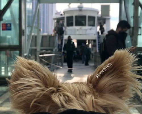 Can Dogs go on the Ferry in NYC?