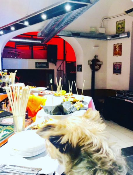 yorkie dog travels to Siena, Italy - dog friendly aperitivo