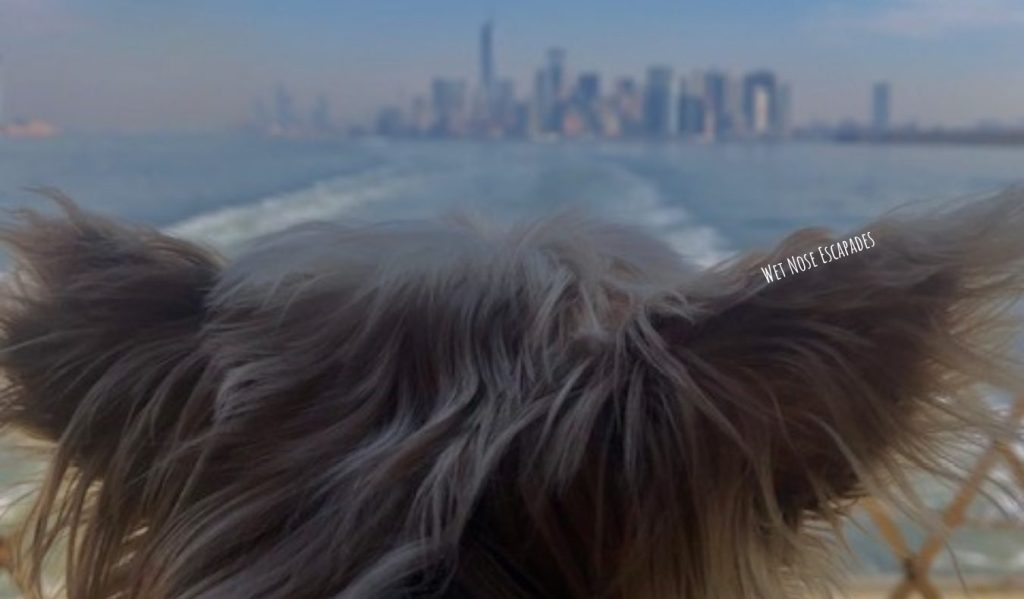 Yorkie dog on ferry in NYC