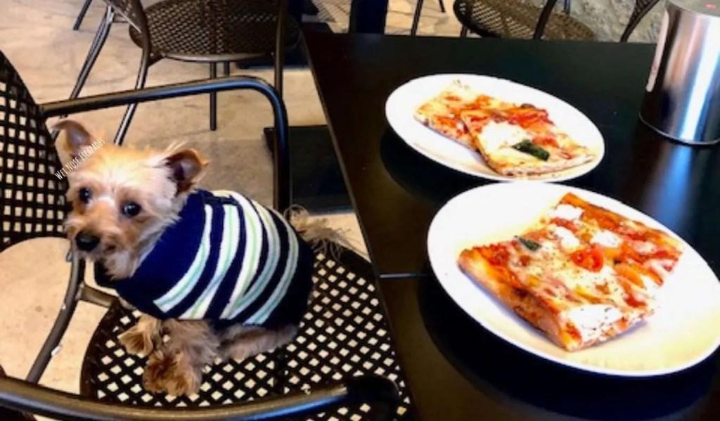 yorkie dog travels to Siena, Italy - dog-friendly restaurant in Siena