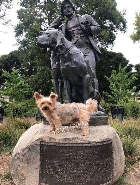 Yorkie dog with Dog Statue at Beverly Gardens Park