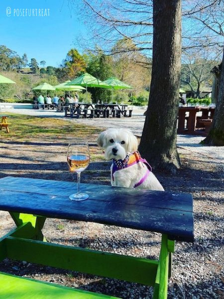 dog friendly warwick wine estate in cape town south africa