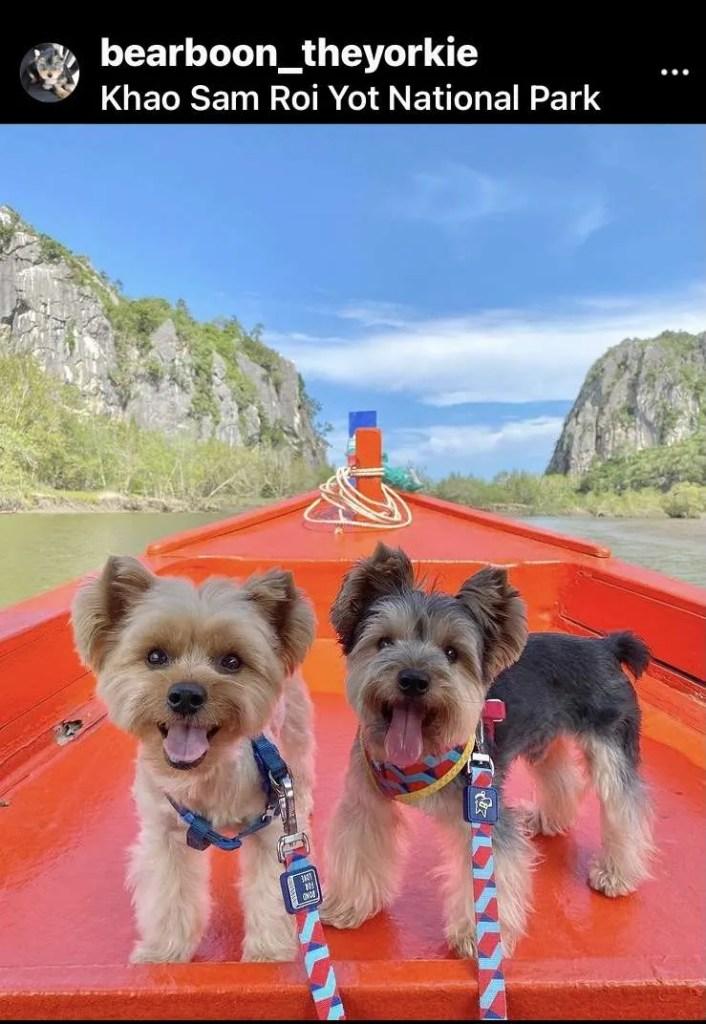 Yorkie dogs at Khao Sam Roi Yot National Park